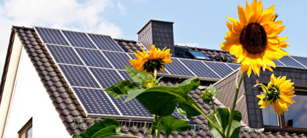 solar panels with sunflower